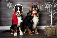 2015 Holiday Pawty Photo Shoot