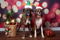 2016 Holiday Pawty Photo Shoot