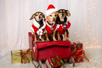 2014 Holiday Pawty Photo Shoot