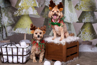 2017 Holiday Pawty Photo Shoot
